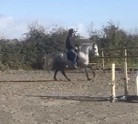Isichia a grey connemara mare showing off her great canter