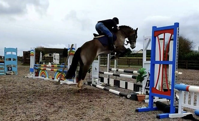 Castledaly sophie a dun cob jumping an oxer