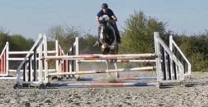 Touchy Subject a piebald pony jumping a big oxer