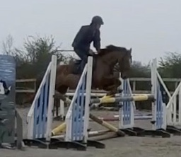 Foxhall Red Clover a chestnut pony gelding jumping an oxer