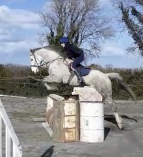 Lady Annabelle a grey irish sport horse mare jumping a fence