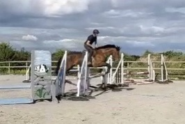 bay mare by watermill Swatch jumping