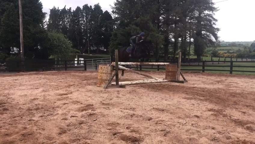 Barnaboy All Black jumping a fence