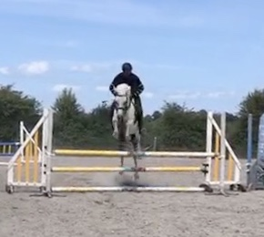 White pony jumping