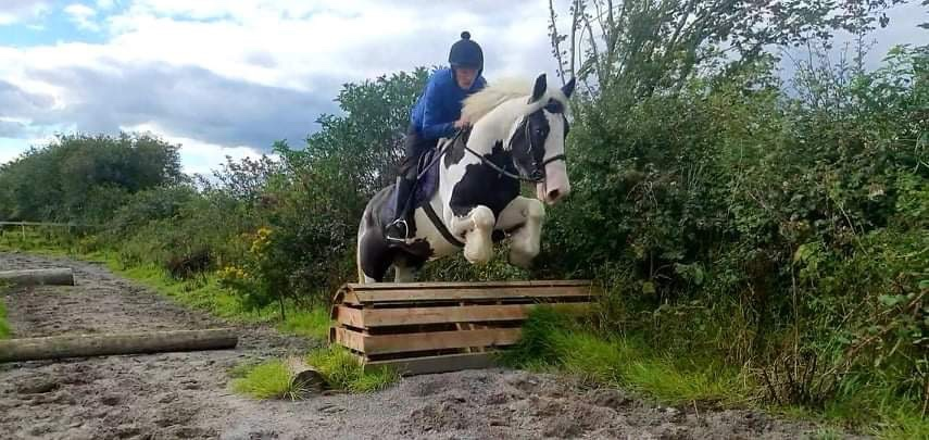 Gary's pride a piebald mare pony jumping