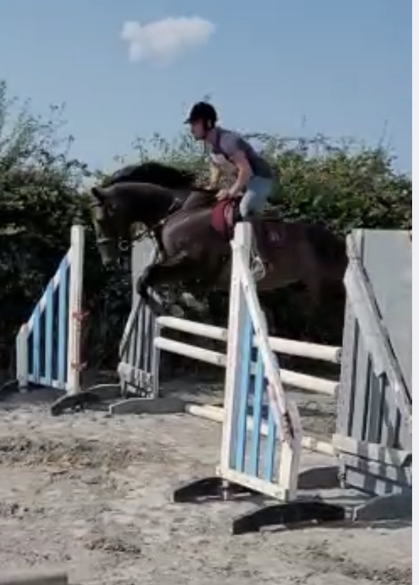 thorooughbred mare mountainmore jumping a show jumping fence
