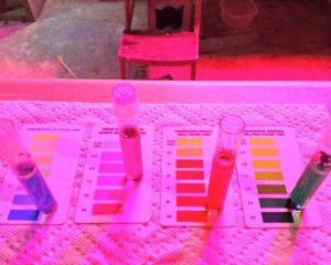 Left to right, pH, Nitrite, Nitrate, Ammonia
