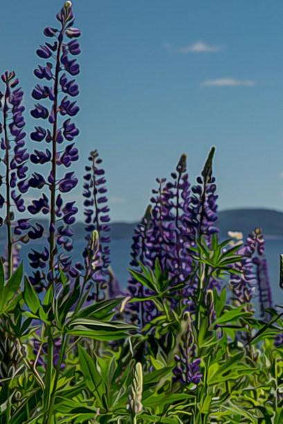 purple lupin paint