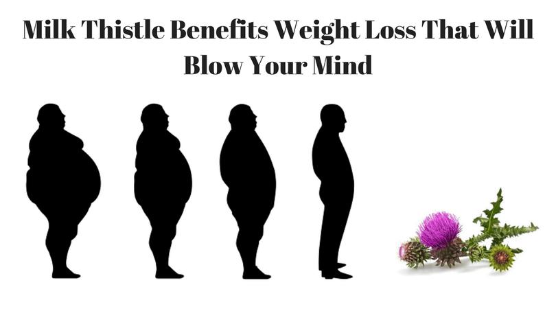 milk-thistle-benefits-weight-loss