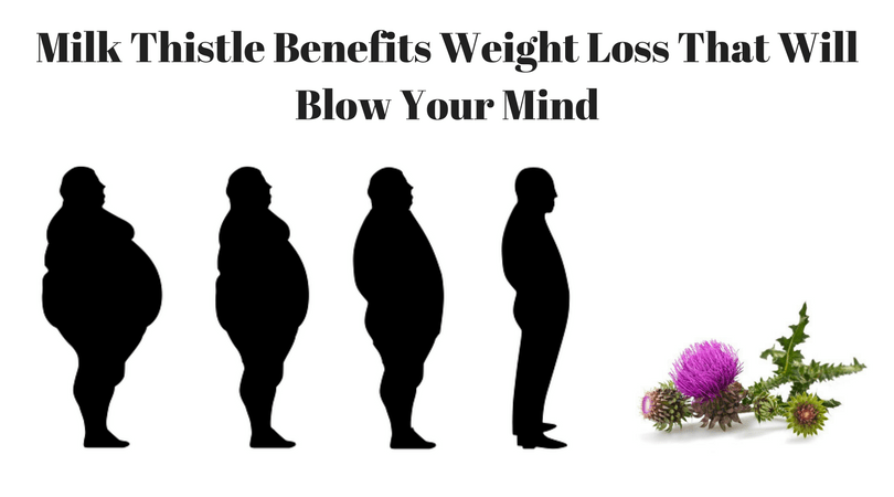 Milk Thistle Benefits Weight Loss That Will Blow Your Mind