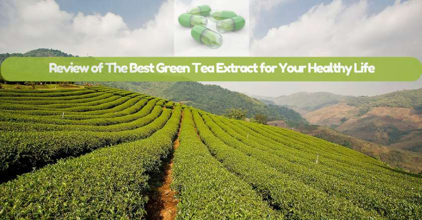 Review-of-The-Best-Green-Tea-Extract-for-Your-Healthy-Life