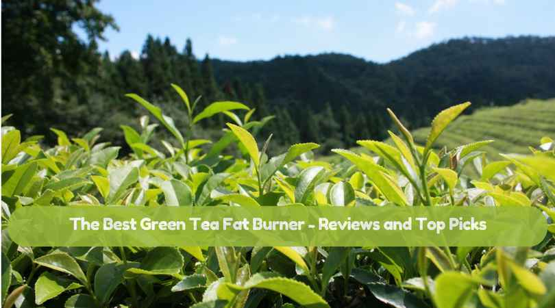 The-Best-Green-Tea-Fat-Burner-Reviews-and-Top-Pick