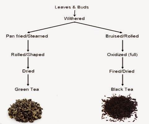 green-tea-vs-black-tea-03