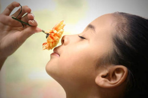 The gift of smell or what your nose knows