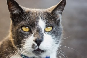 Pet Friendly Adult communities