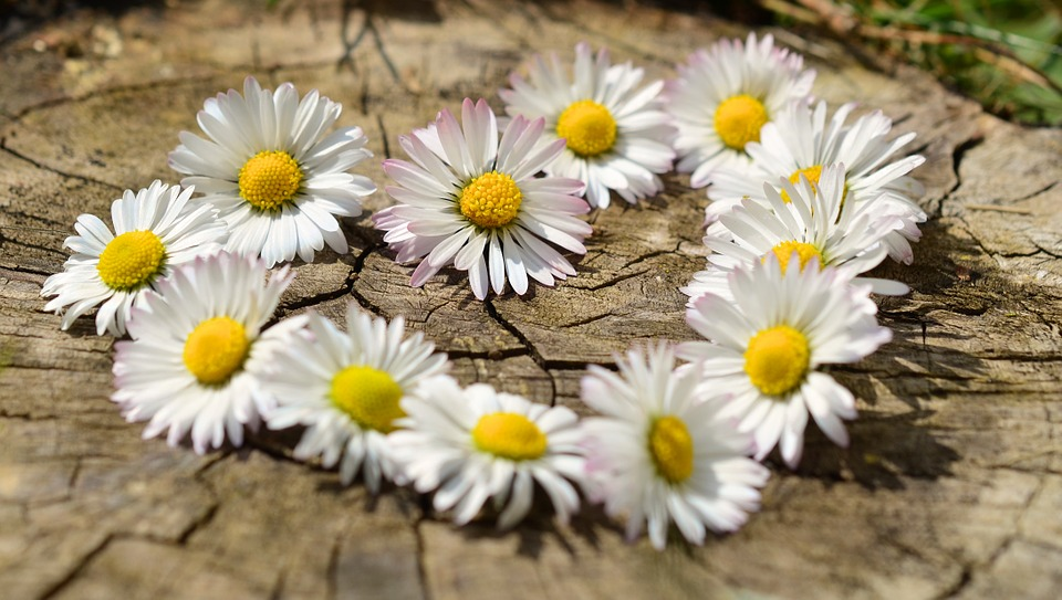 Necklace made of daisies