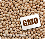 GMO alert: top 10 genetically modified foods to avoid eating