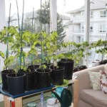 Winter Gardening: Indoor Organic Gardening Secrets