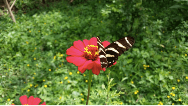 Adding A Touch Of Nature To Your Garden