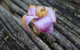 Flower photo by Andy Wangvia via Unsplash