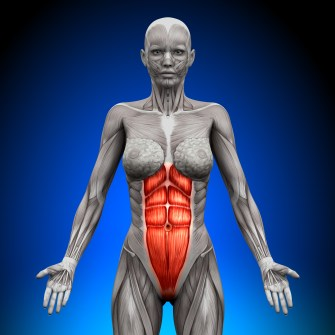 "Rectus Abdiminus, or the ""Six Pack"""