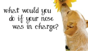 What would you do if your nose was in charge?