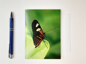 Stillness Butterfly Greetings Card