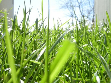 Lawns use a lot of water, which means small changes mean big savings. Photo credit: Gilberto Taccari, Flickr Creative Commons