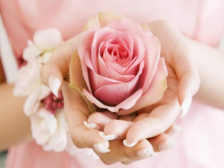 rose day photo