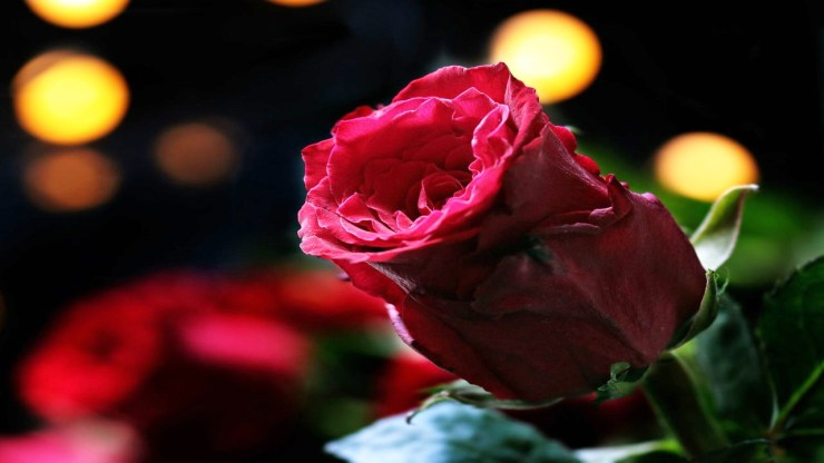 rose day special quotes for her