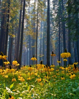 forest-flower-yellow