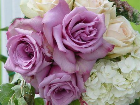 rose-bunch-pink