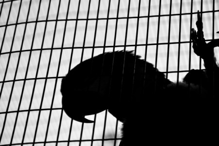 parrot-bird-shadow-cage