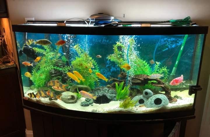 fish-tank-room