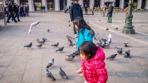 Lepas makan, shopping dan main burung lagi