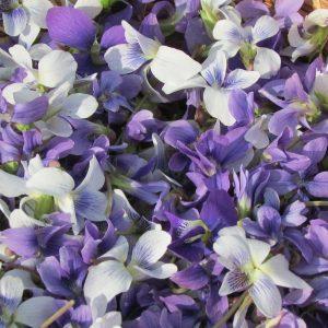 fleurs naturopathie la yourte végétale montaimont Saint françois longchamp Maurienne Savoie