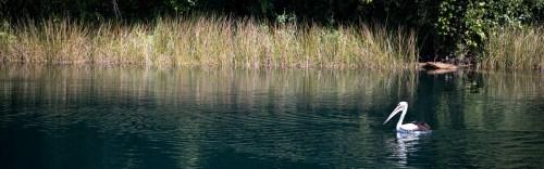 Lake Barrine Cruise