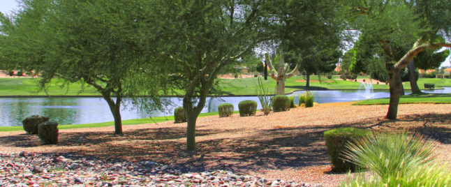 Lake at Palo Verde Golf Course, Sun Lakes, Arizona