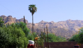 view at end of street, palm trees and greenery, rocky Usery Mountains in background - Close to Loop 202 Usery Mountain Park - 161 N 88th Place, Mesa AZ - Bill Salvatore, Arizona Elite Properties - Mesa Arizona property for sale
