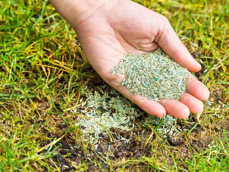 How Long Can I Keep Grass Seed, How Long Can I Keep Grass Seed and Does It Ever Expire?