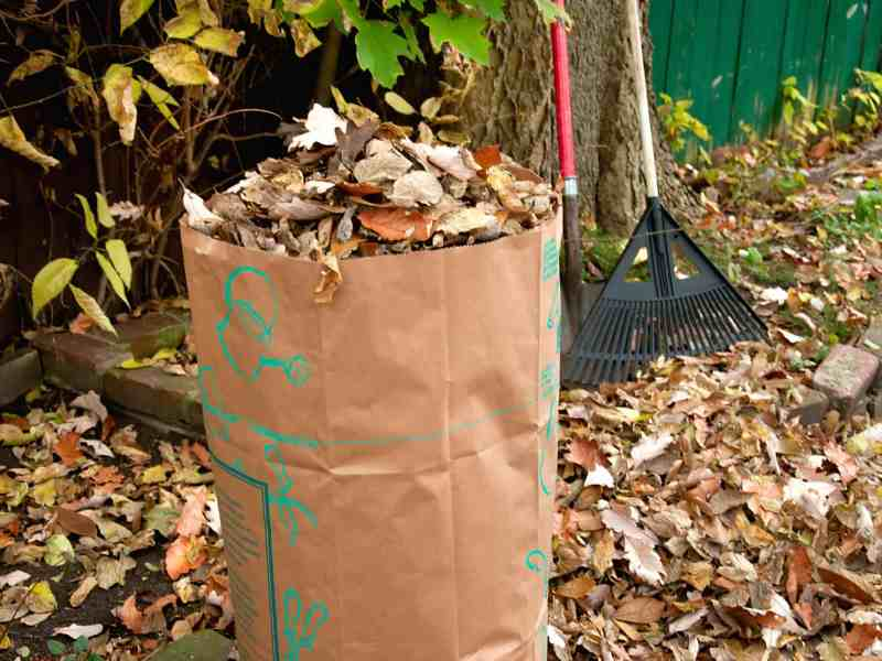 bagging leaves, Bagging Leaves-A Safe Way to Rid Your Yard of Them