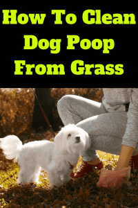 how to clean dog poop from grass, How To Clean Dog Poop From Grass-The Proper Way