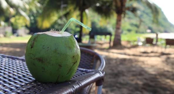 Praia Conceição Fernando de Noronha coconut