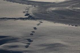 Devil's Thumb Ranch snow prints