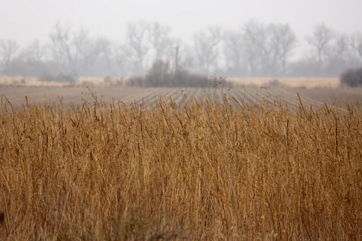 Platte River fields