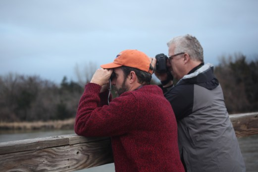 Sandhill cranes on the Platte River landing cameras