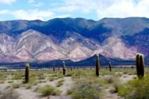 Ruta 33 Altiplano Salta cactus