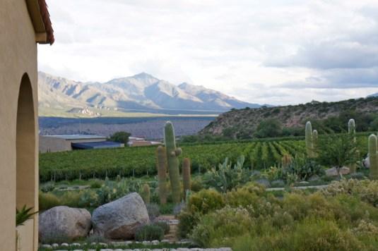 Colomé vineyards