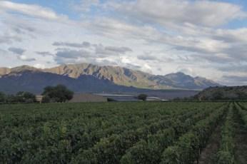 Colomé vineyards far mountain view