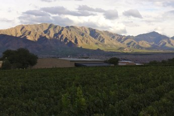 Colomé vineyards mountain view